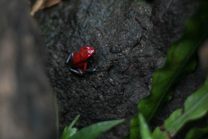 Costa Rica (484 of 551)